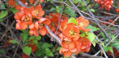 Okänt blomster